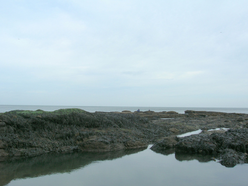 Photograph: Rock pools among the seaweed co veered Cullercoats rocks
