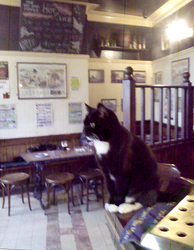Photograph of a young cat sat on the corner of the bar