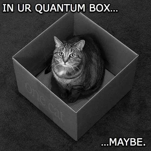Lolcat: Kitty sat in a cardboard box. In ur quantum box...maybe