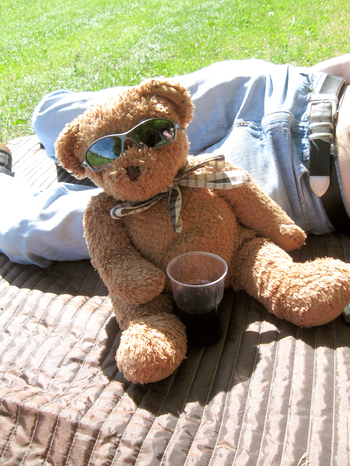 Photo of Mr Ted relaxing in the Sun