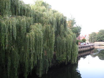 Photo of the river