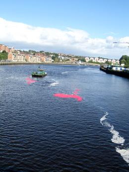 Photo of plastic ducks racing